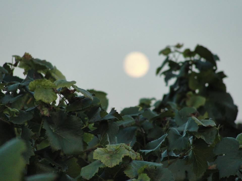 Sun or moon ?