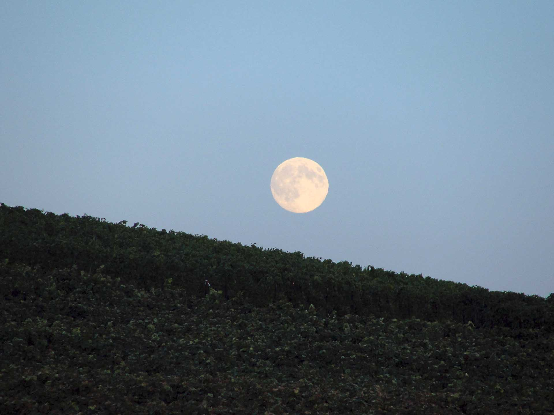An evening moon after the harvest day